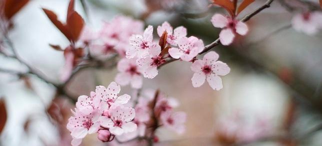 Misceláneas primaverales